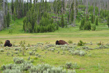 Mietwagenreise Yellowstone
