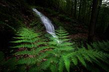 Wasserfall Wald Thüringer Wald