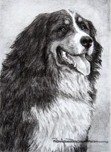 Nr. 1415 Sennenhund