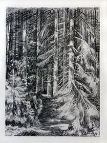 Nr. 1362 Waldweg