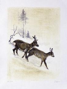 Nr.1230 Rehe im Winter