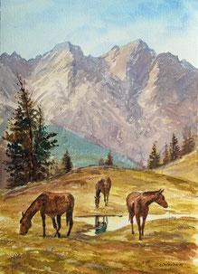 Nr. 2717 Pferde auf der Alp