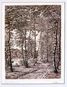 Nr. 814 Waldweg mit Birken