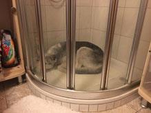 Kann mir jetzt bitte jemand das kalte Wasser aufdrehen?!! (Rainey)