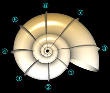 Position der Knoten längs der Wendelung
