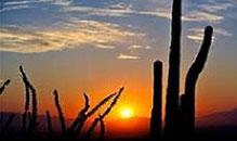Jolie barrière de cactus dans votre formation ? Et la nuit arrive.