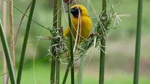 Kenya - Les oiseaux