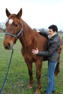 Schwingen eines Pferdes