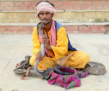 slangenbezweerder india
