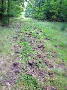 mehr Wildpfad als Wanderweg