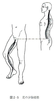 足の少陰筋経