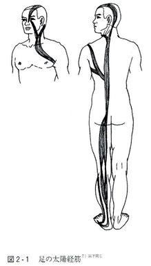 足の太陽経筋