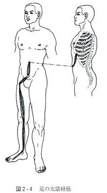足の太陰経筋