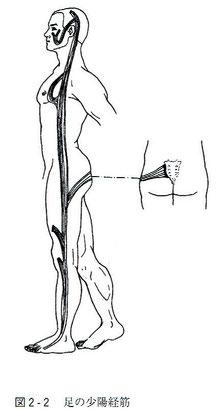足の少陽経筋