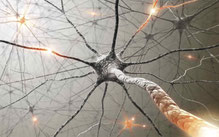 100 milliards de neurones