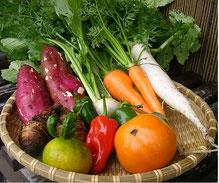 自家栽培の旬の野菜たち
