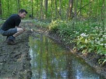 Paul am Gelbbauchunken Habitat bei Rastatt