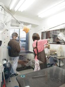 エルム動物病院 杉並区 犬トリミング 猫トリミング トリミング