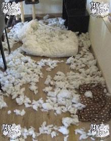 ec chiens destructions faites par un chien avant l'intervention d'un comportementaliste canin