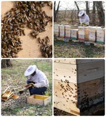 Bienen, Honig, Marille, Wachau, Unterloiben