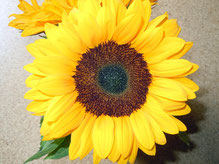 Sonnenblume- Selbstentfaltung