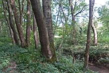 Am Leimbach im NSG Frauweilerwiesen, Foto: A. Treffer