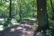 Dämmelwald, Foto: A. Treffer