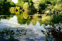 Gewässer im NSG Frauweilerwiesen, Foto: A. Treffer