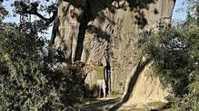 Der kleine Hansj und der riesige Baobab