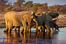 Faszination Tierwelt im Etosha Nationalpark
