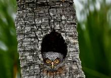 Ja, da wird der eine oder andere ganz schön dumm zum Baum raus schauen;-))