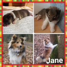 Angie-Jane unsere Drittgeborene 🐕🎉🎀  19:07 Uhr  217g 🍀