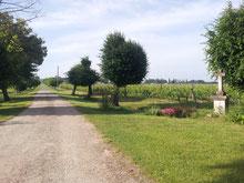 Allée d'accès du Château La Hitte au coeur de son vignoble AOC Buzet