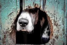 Le journal d'un chien