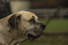 Anthropomorphisme chez le chien