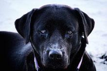 Les chiens ont ils une conscience ?