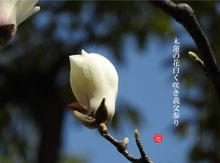リンク:四季の花だより「四季の俳句」