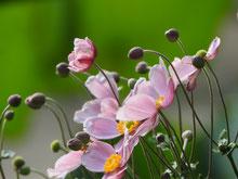 リンク:四季の花だより・夏の花