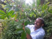 Yayu BR, Äthiopien. ©Thomas Schaaf