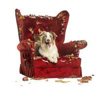 Verlassensängste haben viele Hunde, Alleinsein kann trainiert werden