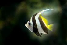 Bunter Fisch im Wasser