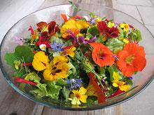 Blütensalat www.kraeuter-entdecken.de