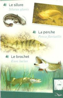 """Quelques poissons visibles dans la """"salle sous l'eau"""""""