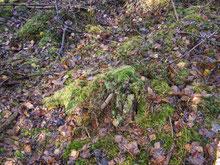 Bild 1 Habitat
