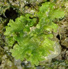 Bild 4: Die Pflanze