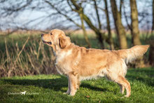 Brentley of Remy Martin Goldens