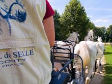 Somme Groupes - Agence de voyages - Réceptif - Voyages en groupes - Somme - Groupes - Séjour - Hauts de France - Amiens - Val de Selle - Centre équestre - Chevaux
