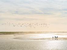 Somme Groupes - Agence de voyages - Réceptif - Bateau en Baie de Somme - Croisière - Séjour baie de Somme - Weekend baie de Somme - Séjour en groupe - Parc du Marquenterre - Voir les phoques en baie de Somme - Observer les phoques en Baie de Somme