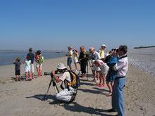 Somme Groupes - Séjour - Journée - Groupes - Somme - Agence - Réceptif - Randonnée - Voyage - Baie de Somme - Nature - Oiseaux - Phoques - Week-end