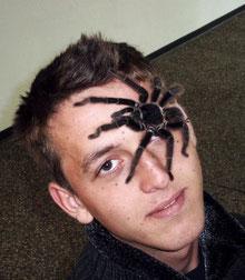 Insectophobie- Spinnen hautnah erleben - Spinnen -und Insekten-Ausstellung